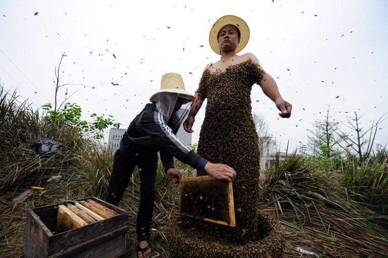 Пчеловоды картинки смешные