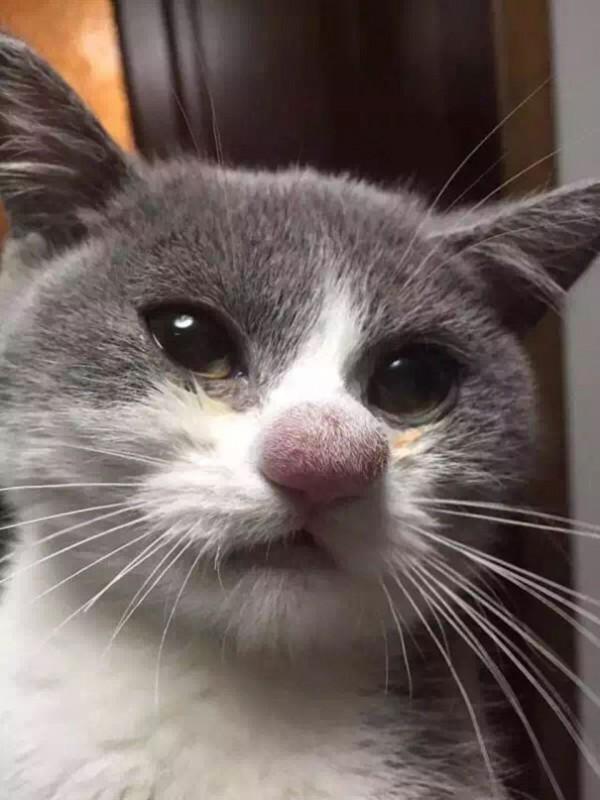20 котов, ужаленных пчелами