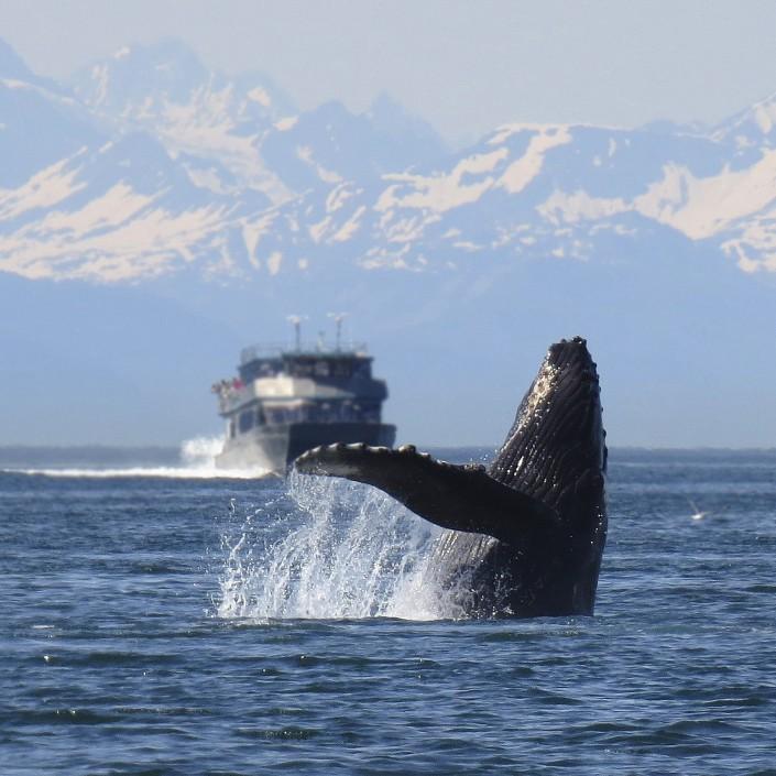 Мамы-киты переходят на шепот, чтобы обезопасить детенышей
