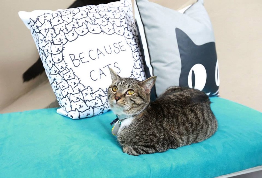 "<a href=""https://www.facebook.com/media/set/?set=a.737513412967611.1073741829.317380134980943&type=3"" title=""Cat Cafe by Purina ONE®"" data-ft=""{"">Cat Cafe by Purina ONE®</a>"
